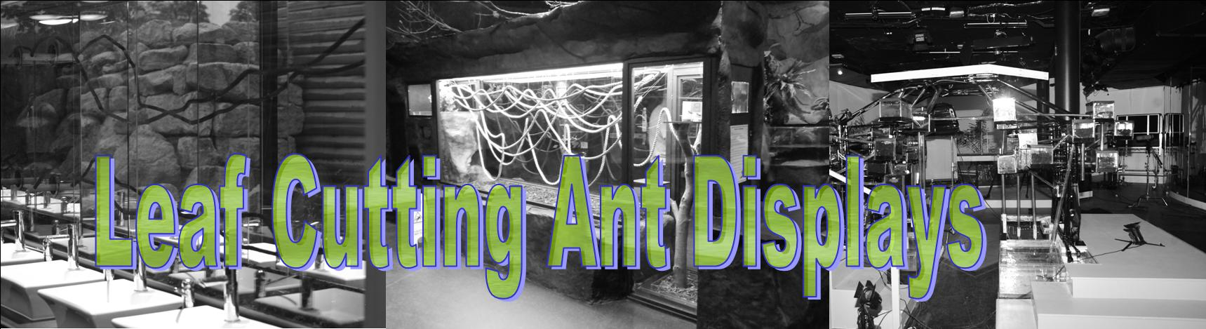 We Are The Worlds Leading Professional Leaf Cutting Ant Exhibit Installer.  Whether You Are Looking For A Home Study Set Up Or A Major Display For A  Zoo Or ...